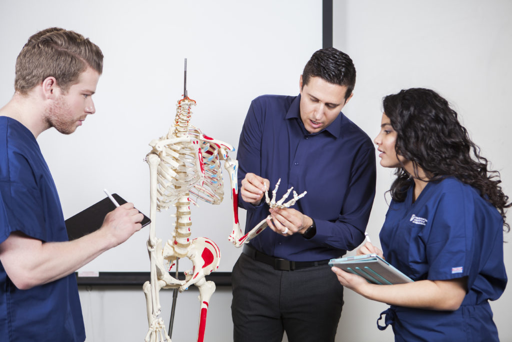 Healthcare educator teaches students with skeleton model